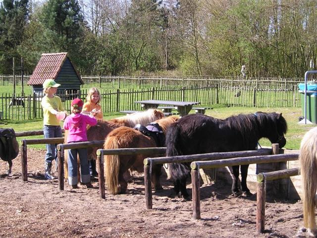 de Krim manege en kinderboerderij