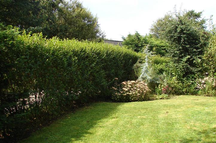 gedeelte tuin